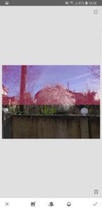 розовый фон на голубом небе