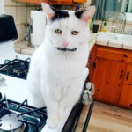 Гэри кот в Instagram