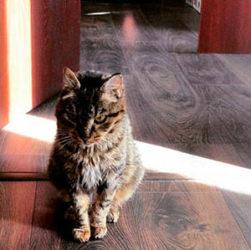Кошка Матроска в Instagram