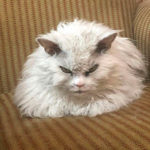 Кот Альберт в Instagram