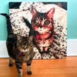 Матильда кошка в инстаграм