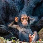 Животный мир Африки в Instagram