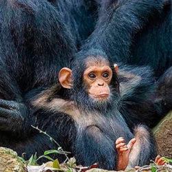 Животный мир Африки в инстаграм