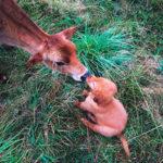 lnsta_pups Instagram аккаунт про животных